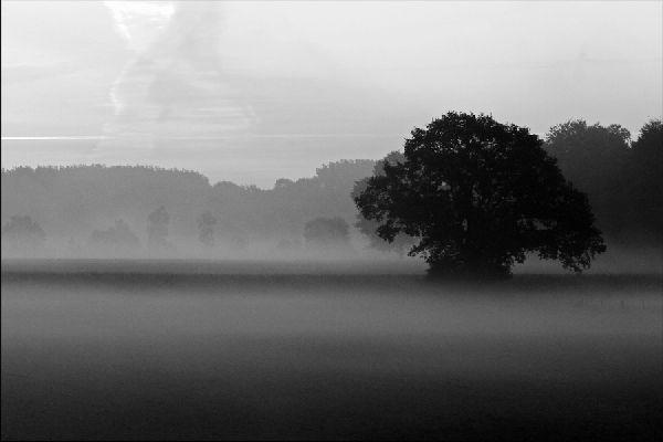 Schwarz-Weiss Photographie, Baum in der Bauernschaft Berdel, Telgte | Photo: Michael Sandner