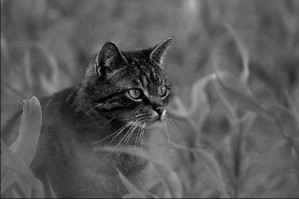 Schwarz-Weiss Photographie, Kater Ludwig | Photo: Michael Sandner